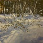 winter_in_my_backyard
